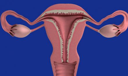 Your Uterus